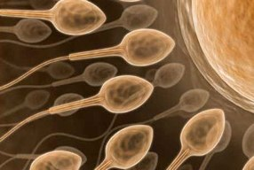 Low Sperm Production